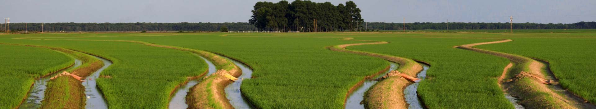 Rice fields of Cross County, Arkansas